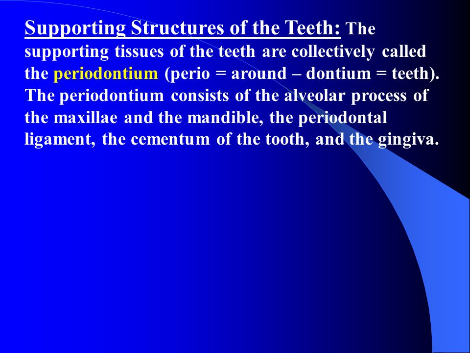 Supporting Structures of the Teeth: The supporting tissues of the teeth are collectively called the periodontium (perio = around – dontium = teeth).