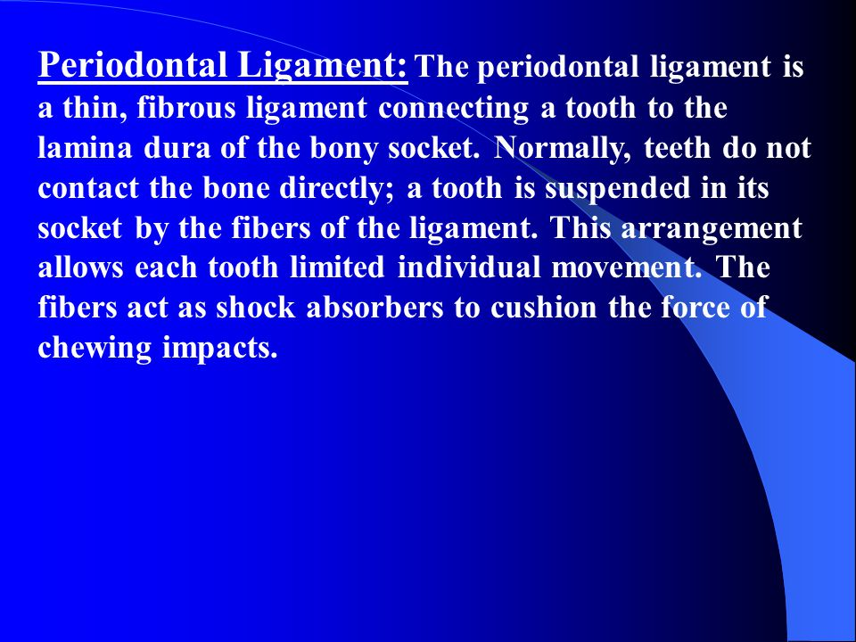 Periodontal Ligament: The periodontal ligament is a thin, fibrous ligament connecting a tooth to the lamina dura of the bony socket.