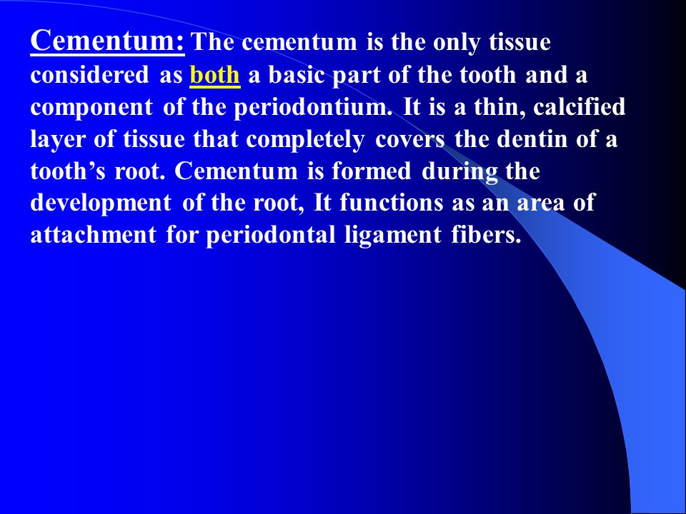 Cementum: The cementum is the only tissue considered as both a basic part of the tooth and a component of the periodontium.