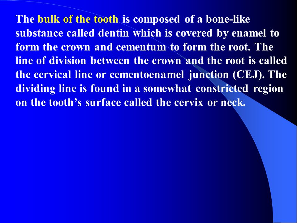 The bulk of the tooth is composed of a bone-like substance called dentin which is covered by enamel to form the crown and cementum to form the root.