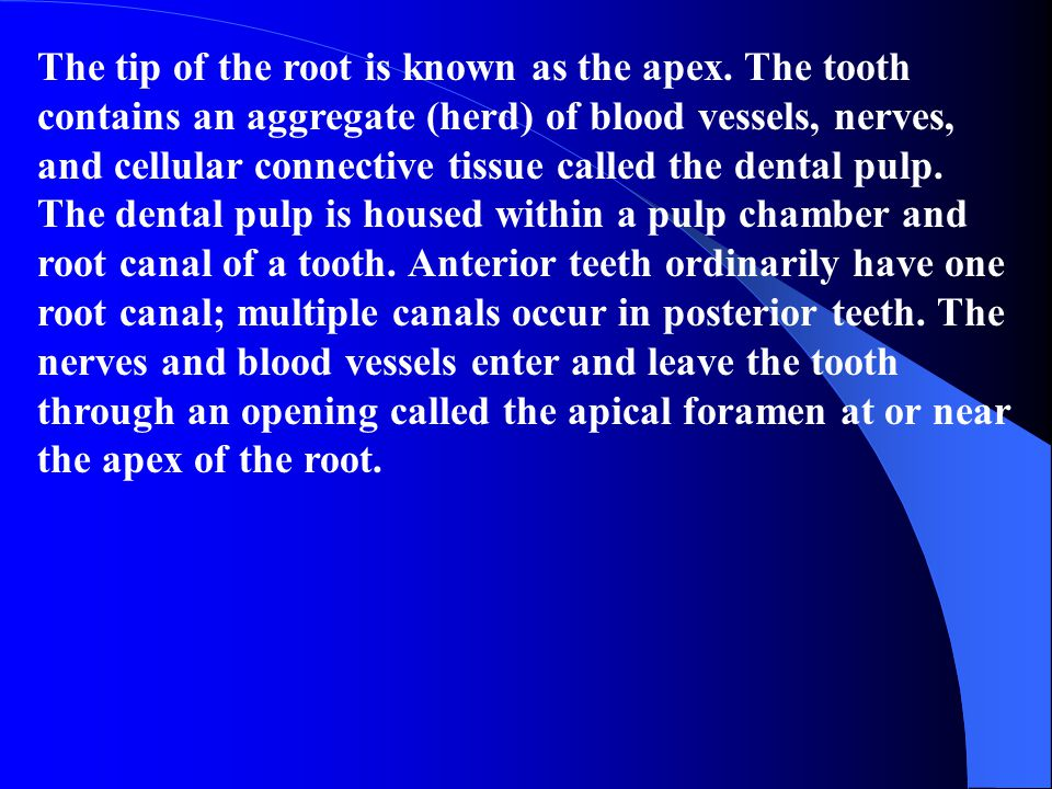 The tip of the root is known as the apex