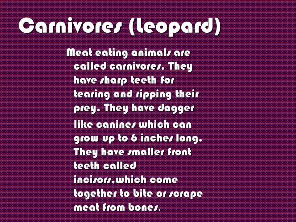 Carnivores (Leopard) Meat eating animals are called carnivores. They have sharp teeth for tearing and ripping their prey. They have dagger.