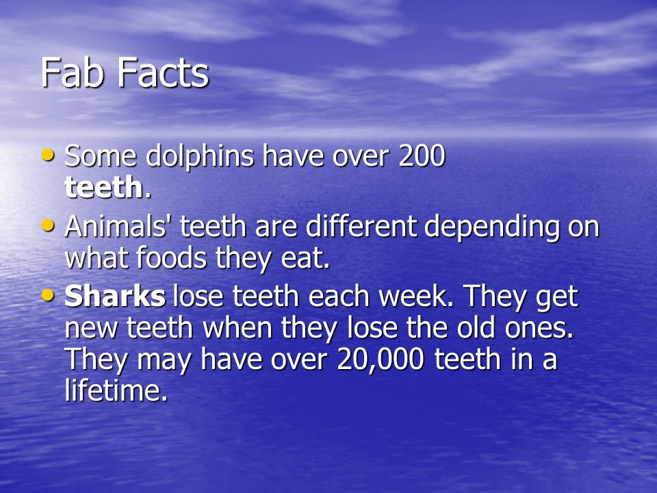 Fab Facts Some dolphins have over 200 teeth.