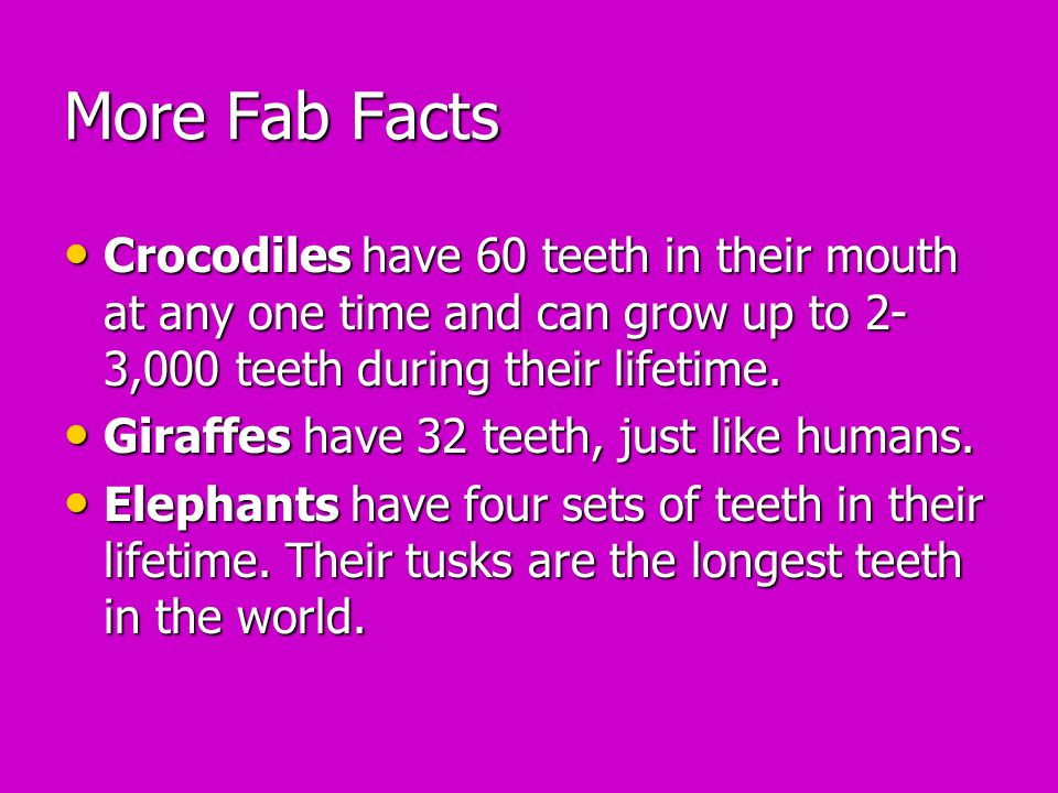 More Fab Facts Crocodiles have 60 teeth in their mouth at any one time and can grow up to 2-3,000 teeth during their lifetime.