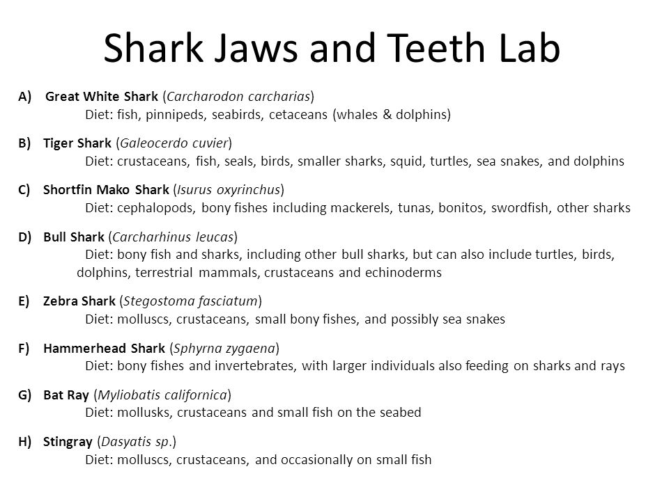 Shark Jaws and Teeth Lab