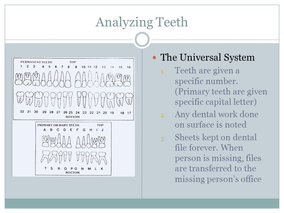 Analyzing Teeth The Universal System