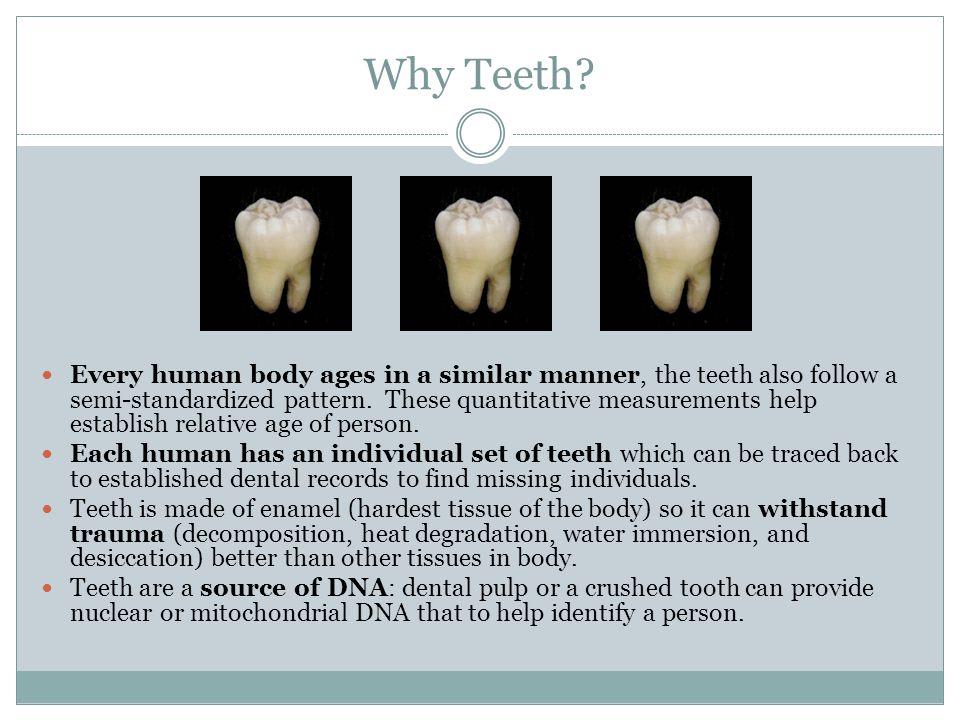Why Teeth