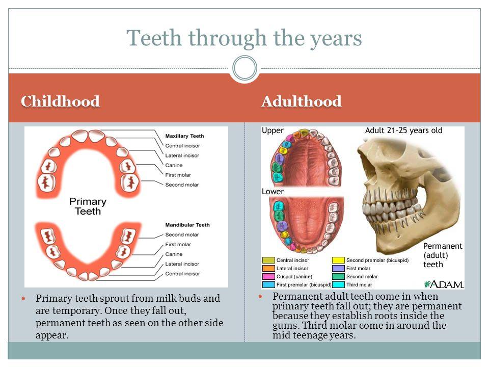 Teeth through the years