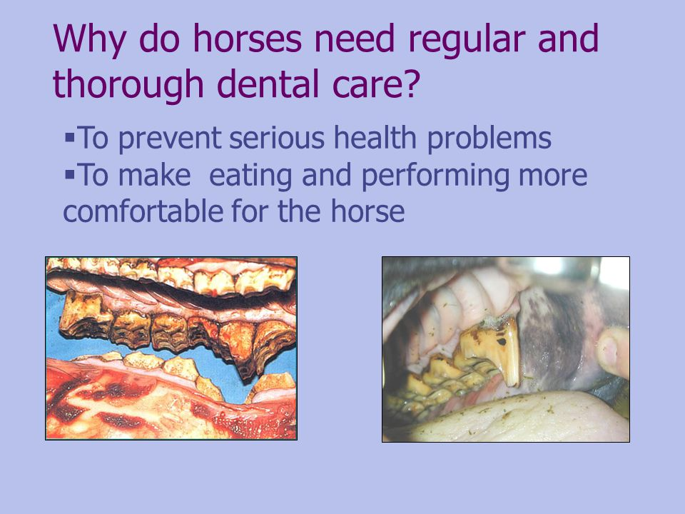 Why do horses need regular and thorough dental care