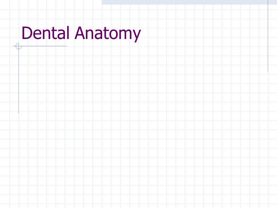 Dental Anatomy Label skull teeth, maxilla mandible lay terms pic of caps