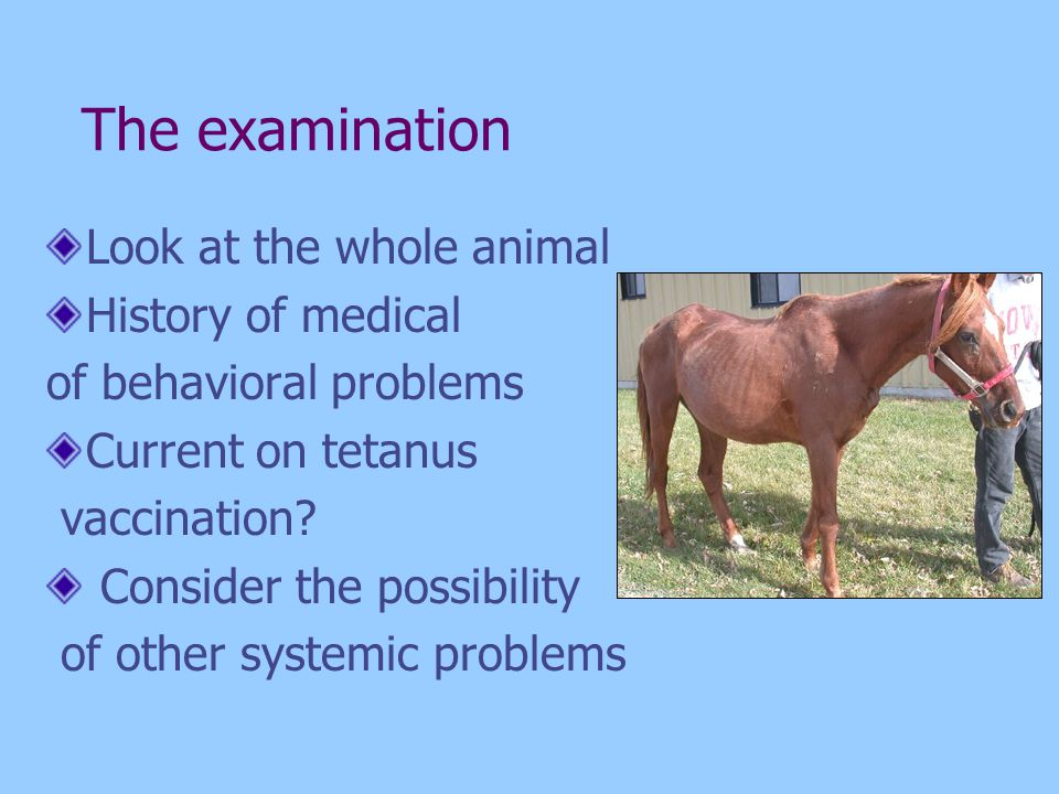 The examination Look at the whole animal History of medical