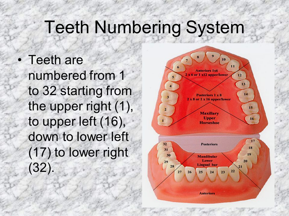 Teeth Numbering System