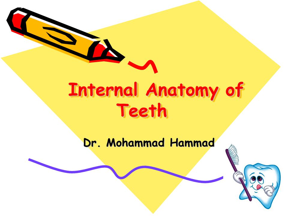 Internal Anatomy of Teeth