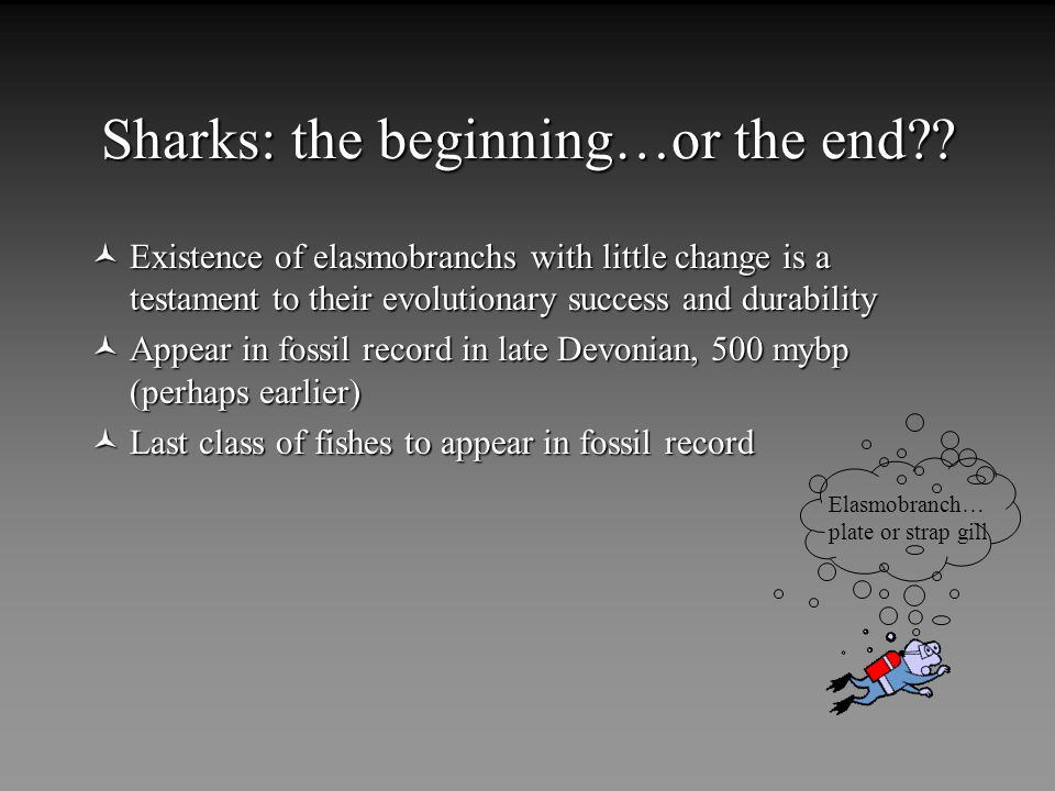 Sharks: the beginning…or the end