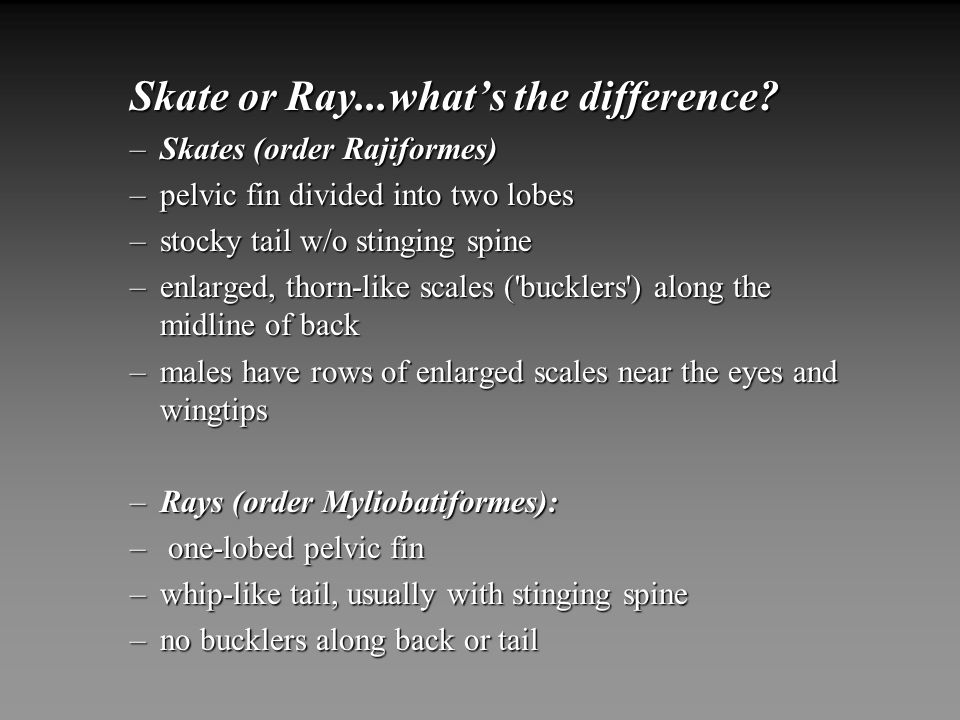 Skate or Ray...what's the difference
