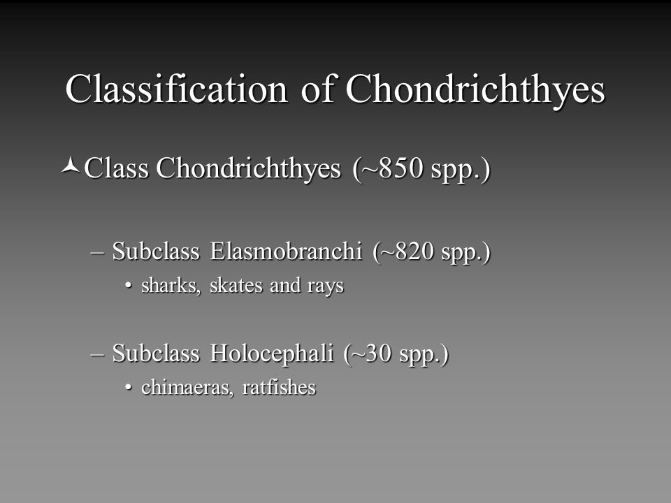 Classification of Chondrichthyes