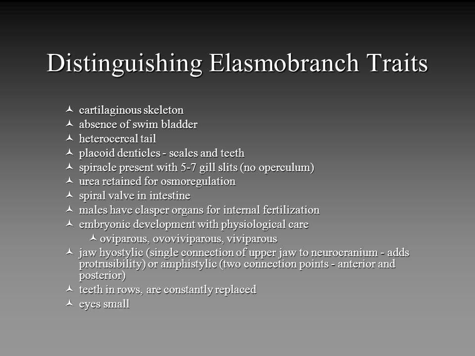 Distinguishing Elasmobranch Traits