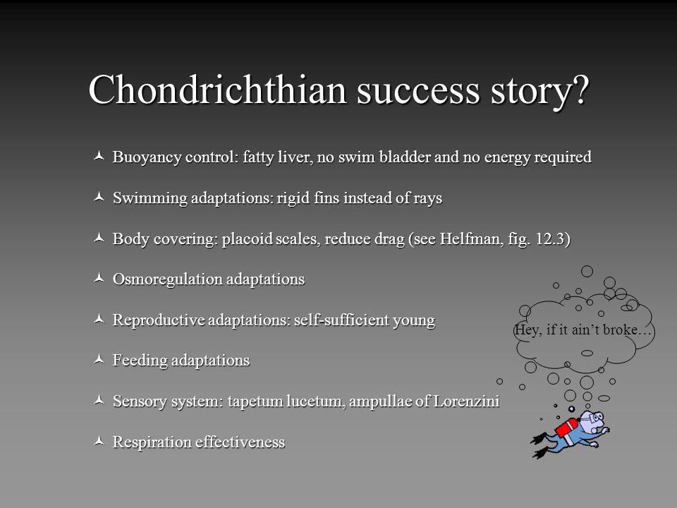 Chondrichthian success story