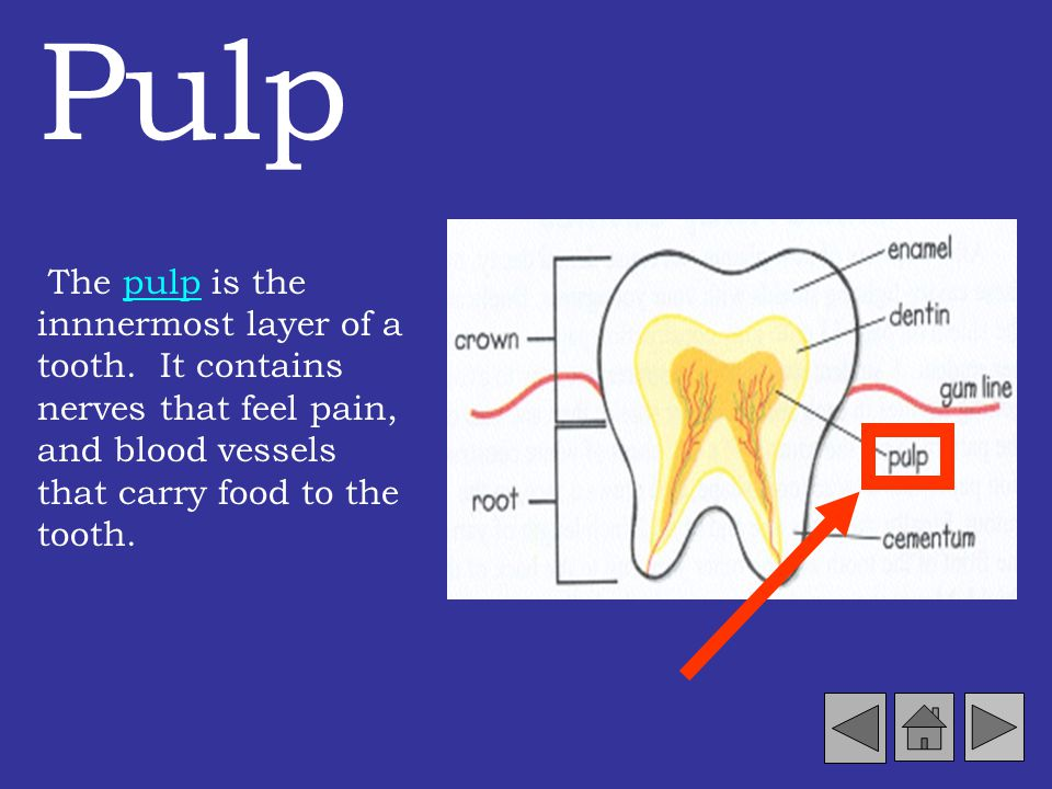 Pulp The pulp is the innnermost layer of a tooth.