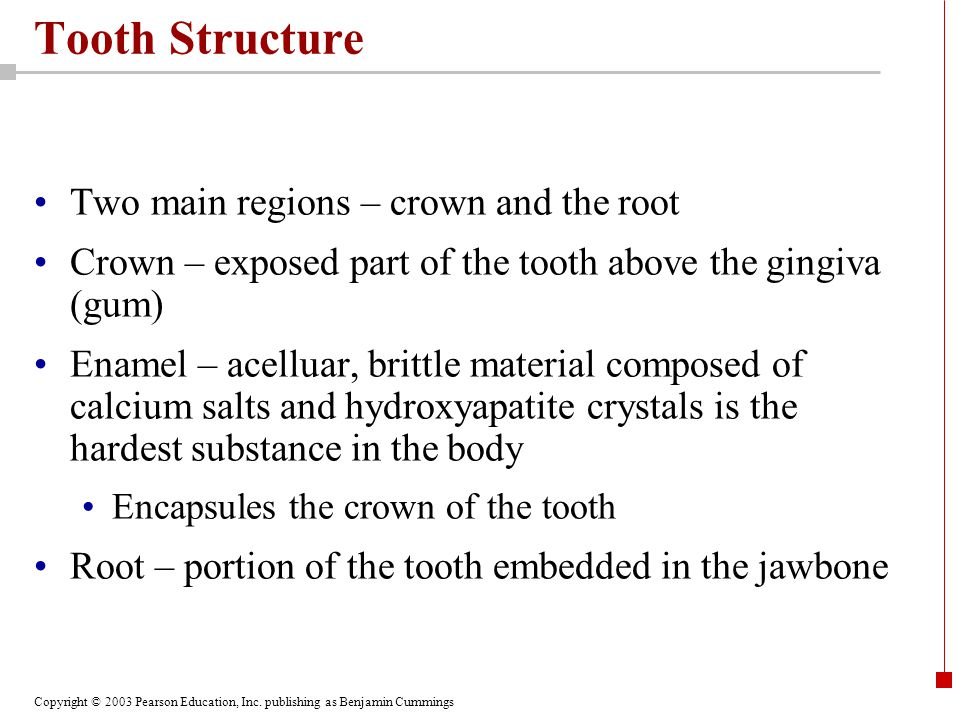Tooth Structure Two main regions – crown and the root