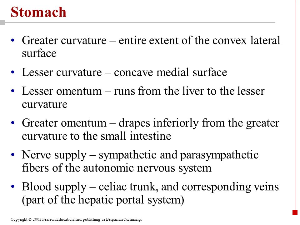 Stomach Greater curvature – entire extent of the convex lateral surface. Lesser curvature – concave medial surface.