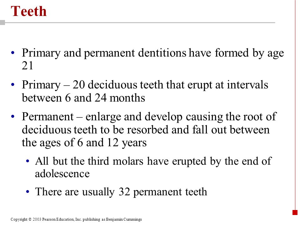 Teeth Primary and permanent dentitions have formed by age 21