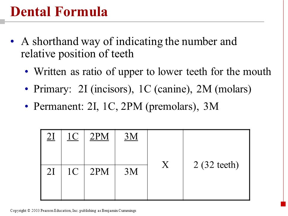 Dental Formula A shorthand way of indicating the number and relative position of teeth. Written as ratio of upper to lower teeth for the mouth.