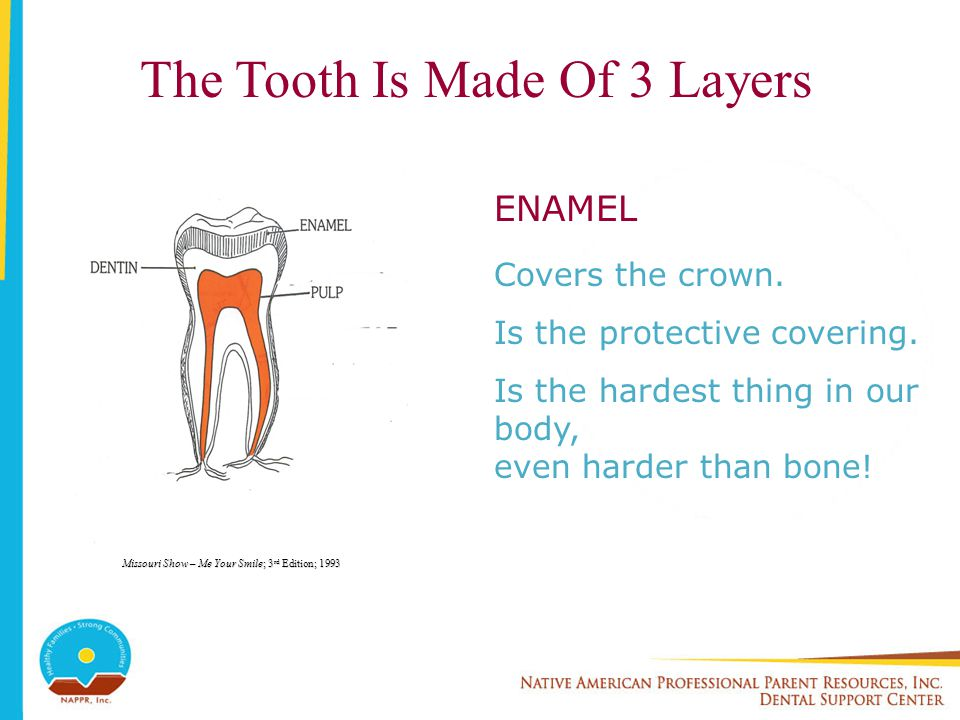 The Tooth Is Made Of 3 Layers