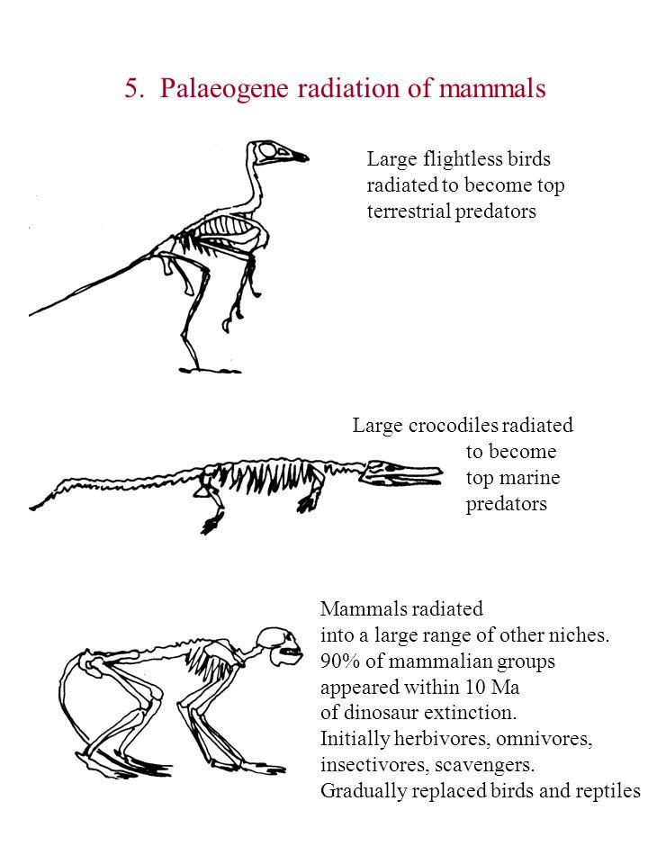 5. Palaeogene radiation of mammals