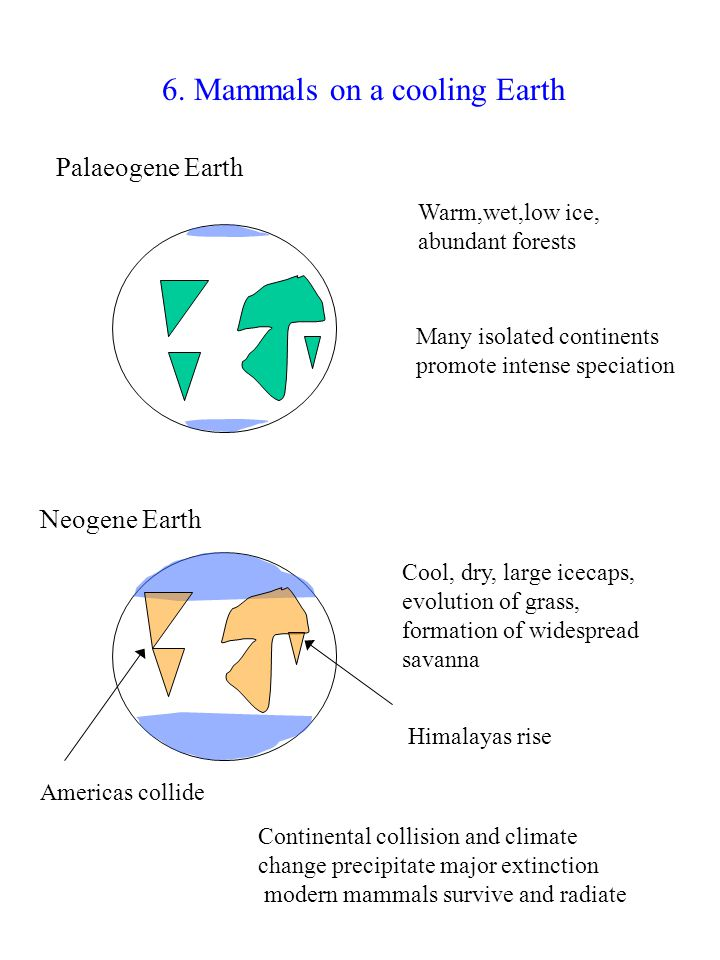 6. Mammals on a cooling Earth