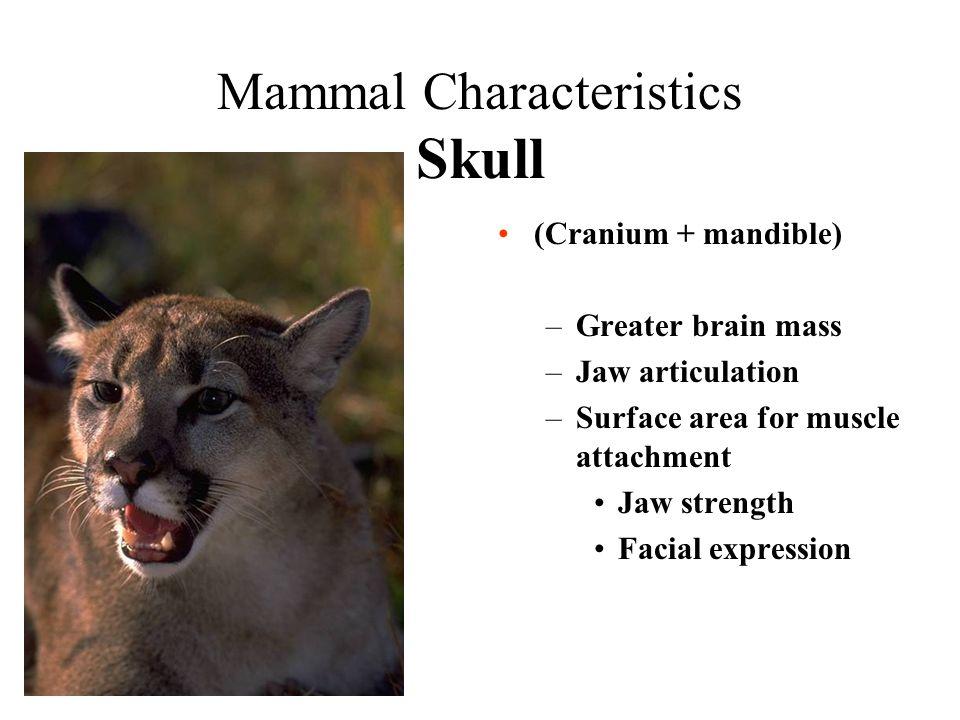 Mammal characteristics