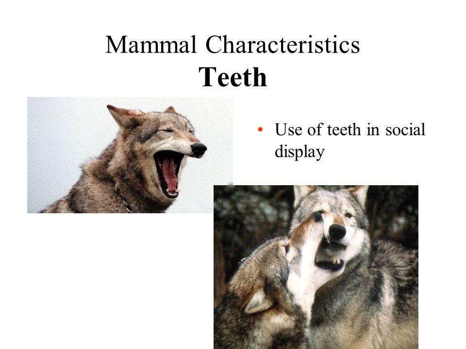 Mammal Characteristics Teeth