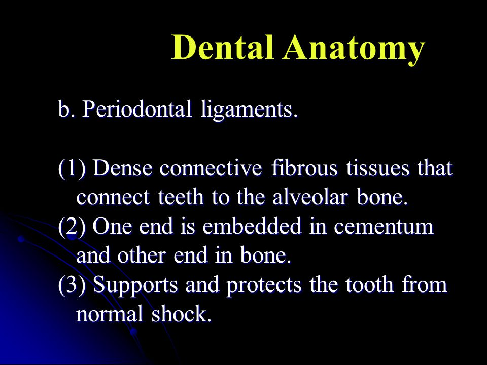 Dental Anatomy b. Periodontal ligaments.