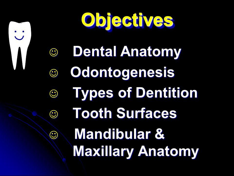 Objectives Dental Anatomy Odontogenesis Types of Dentition