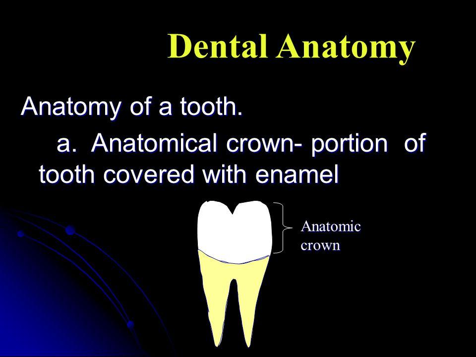 Dental Anatomy Anatomy of a tooth.