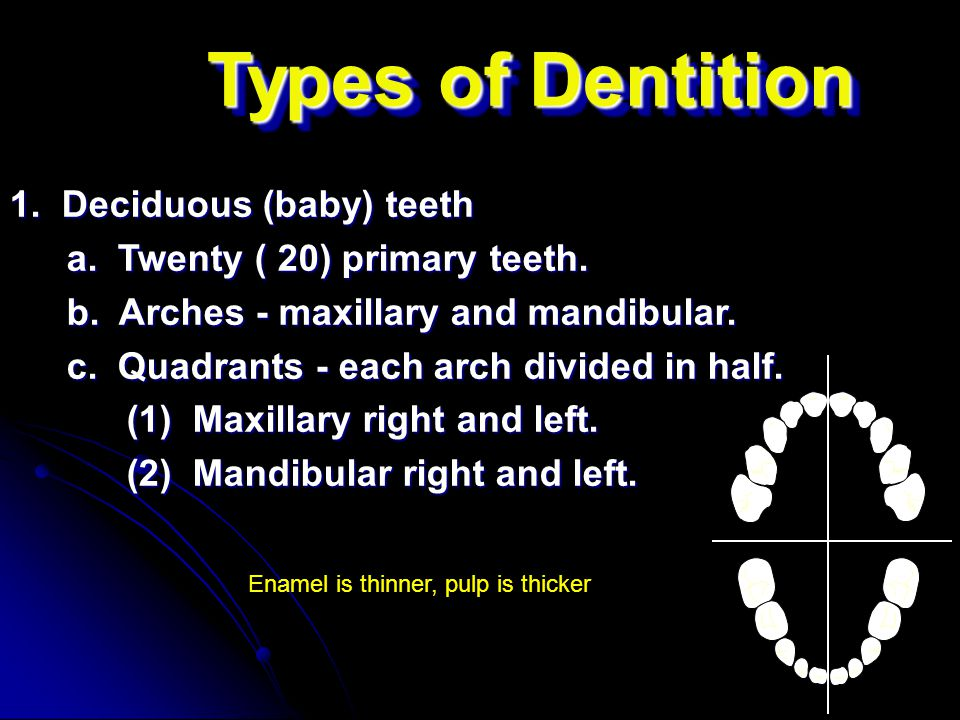 Types of Dentition 1. Deciduous (baby) teeth