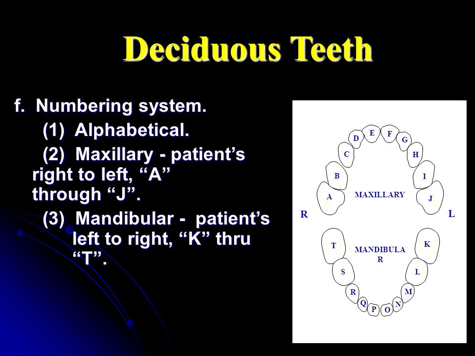 Deciduous Teeth f. Numbering system. (1) Alphabetical.