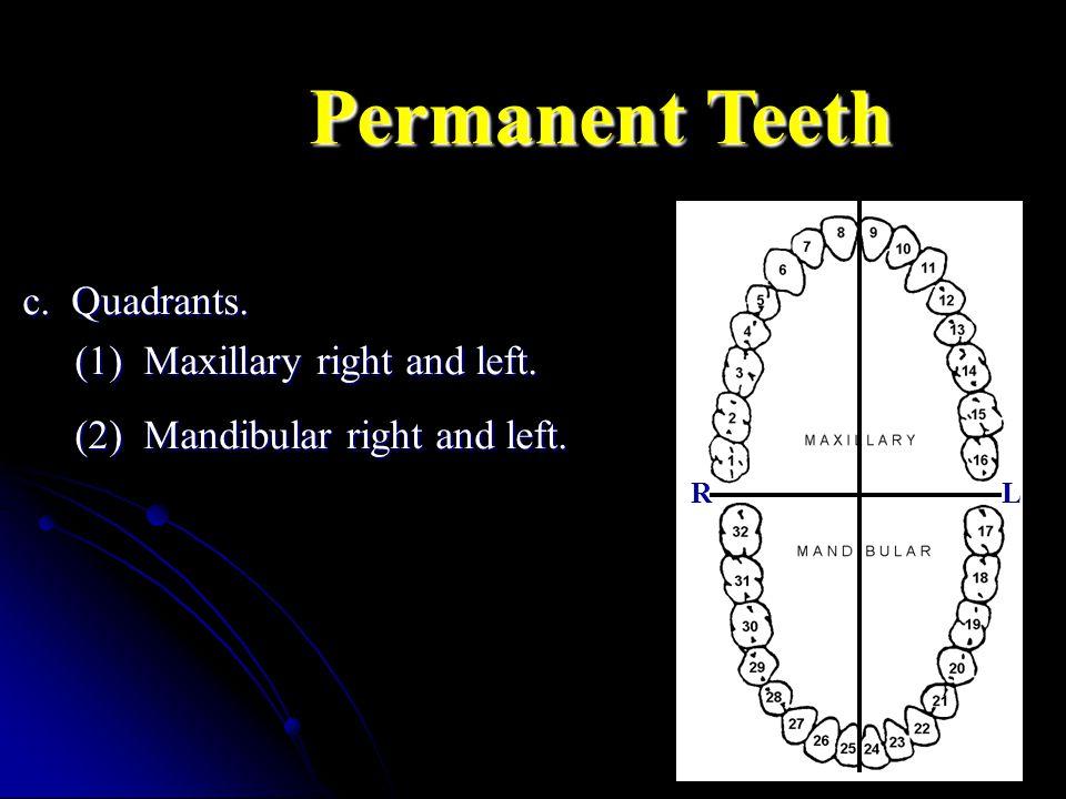 Permanent Teeth c. Quadrants. (1) Maxillary right and left.