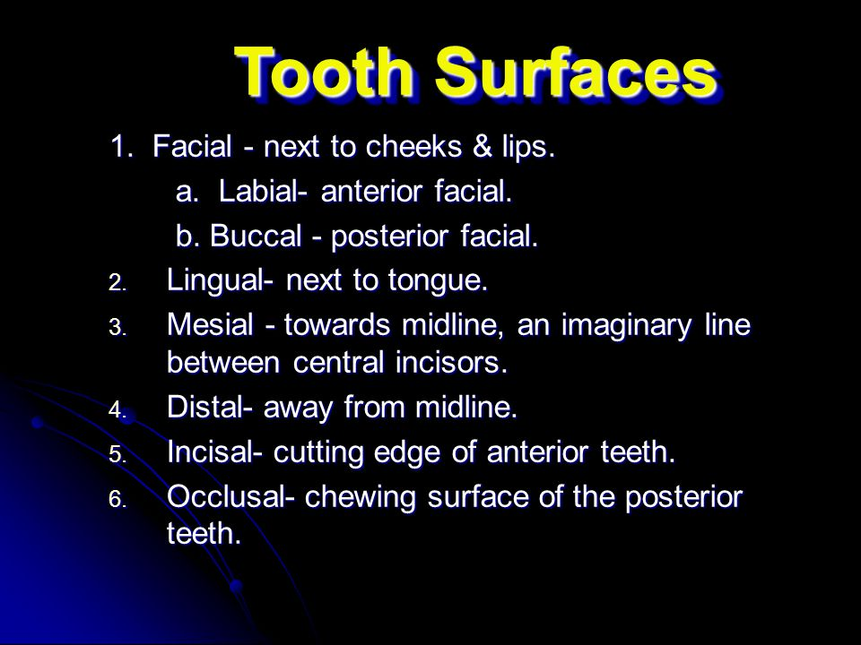 Tooth Surfaces 1. Facial - next to cheeks & lips.
