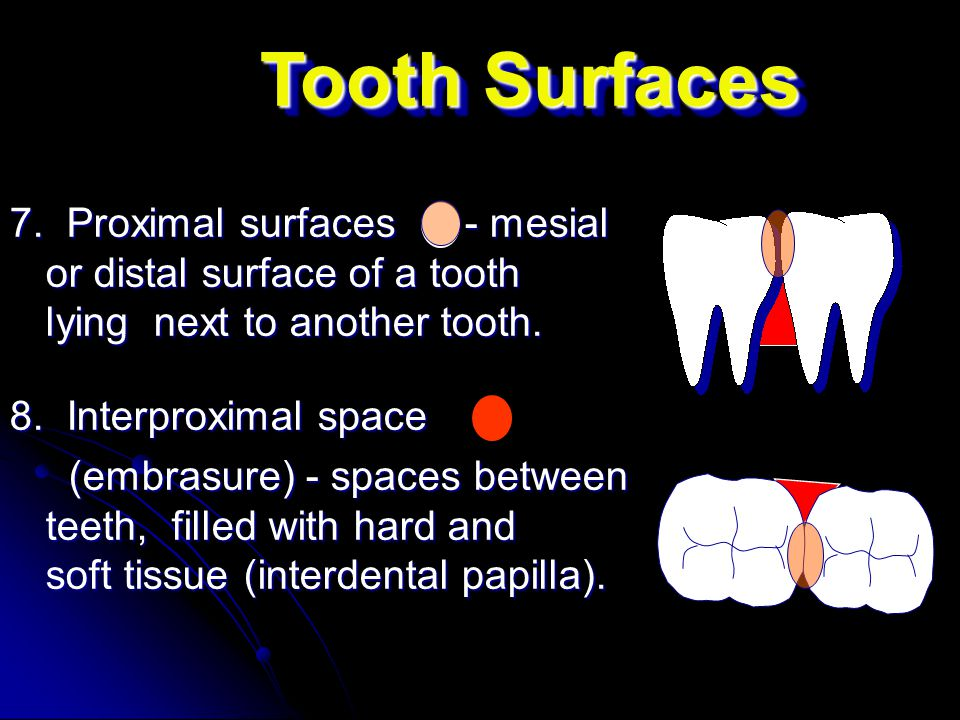 Tooth Surfaces