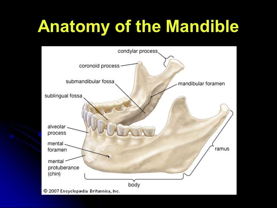 Anatomy of the Mandible