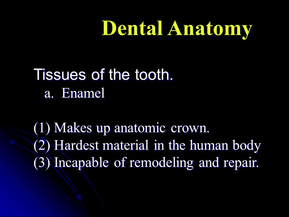 Dental Anatomy Tissues of the tooth. a. Enamel
