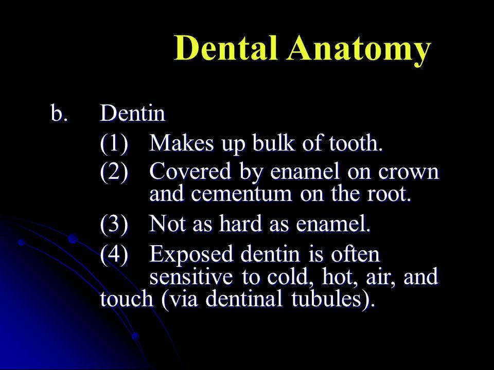 Dental Anatomy b. Dentin (1) Makes up bulk of tooth.
