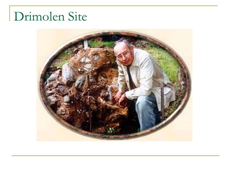 Drimolen Site