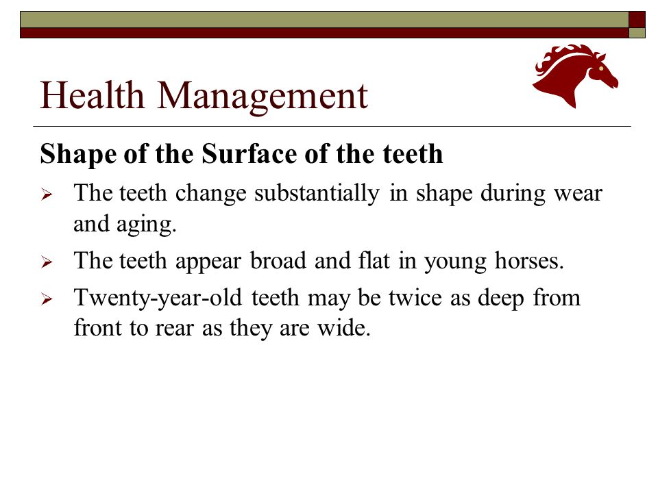 Health Management Shape of the Surface of the teeth