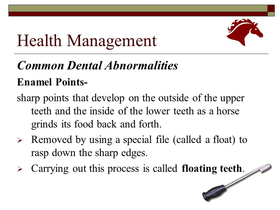 Health Management Common Dental Abnormalities Enamel Points-