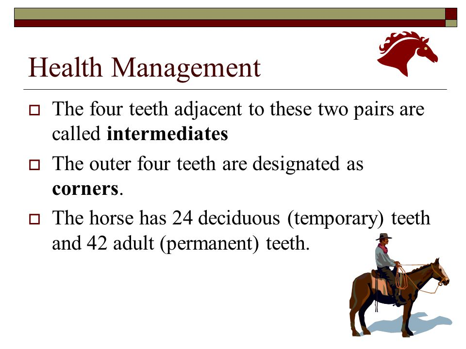 Health Management The four teeth adjacent to these two pairs are called intermediates. The outer four teeth are designated as corners.
