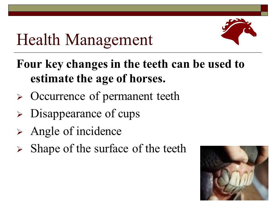 Health Management Four key changes in the teeth can be used to estimate the age of horses. Occurrence of permanent teeth.