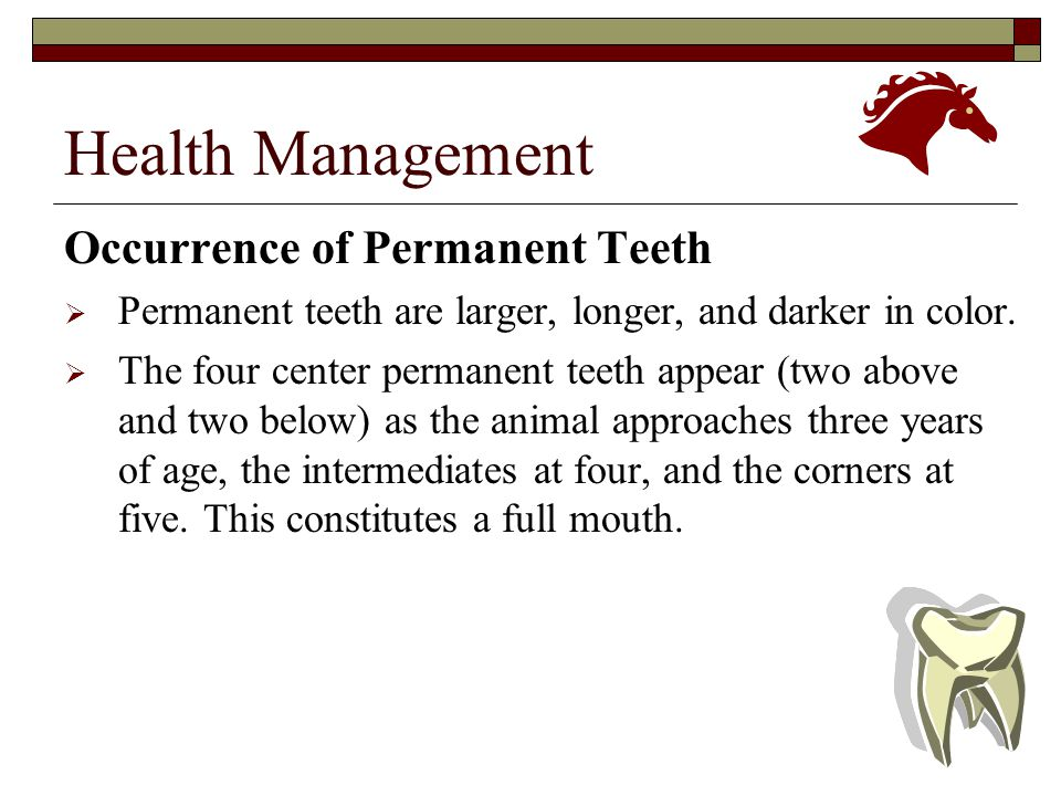 Health Management Occurrence of Permanent Teeth