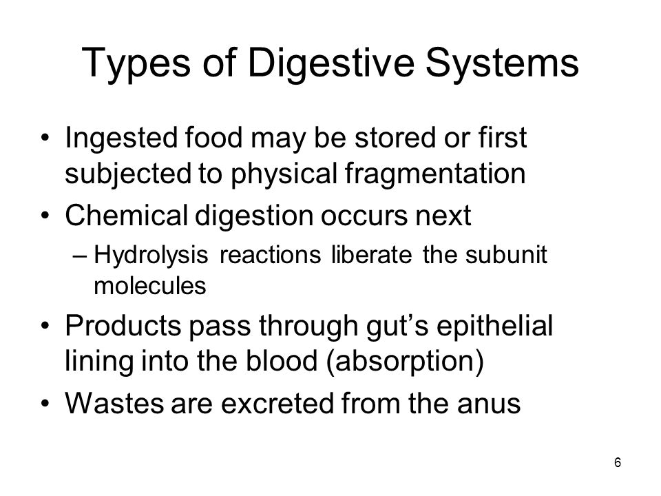 Types of Digestive Systems